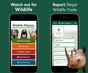 wildlife witness save endangered species app